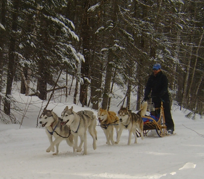 Dog sledding in the high peaks near Salem.